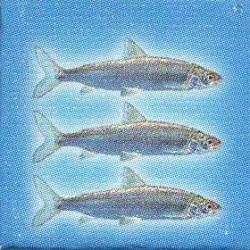 3 Vissen